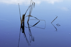 isp_oe_abs_water_reeds_1