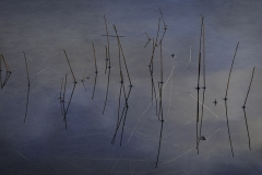 isp_oe_abs_water_reeds_2