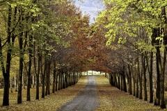 isp_oe_ls_autumn_trees