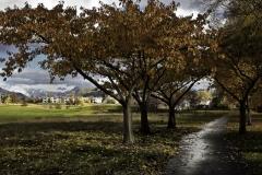 isp_oe_ls_autumn_colours