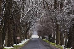 isp_oe_ls_winter_avenue