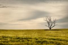 isp_oe_ls_lone_tree