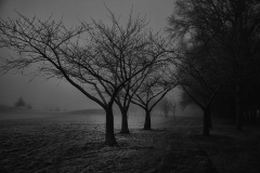 isp_oe_mono_winter