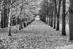 isp_oe_mono_autumn_avenue