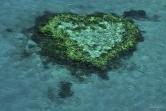isp_ssa_heart_reef