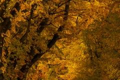 isp_ssnz_autumn_av