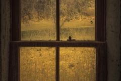 isp_ssnz_garibaldi's_window